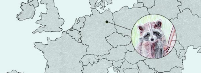 Europakarte mit Berlin. Im Zentrum, Bild eines Waschbären