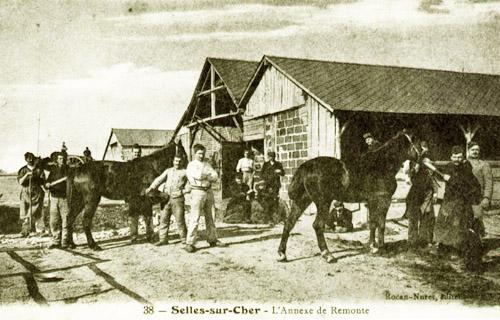 Tierpflege und Pferde im Krieg